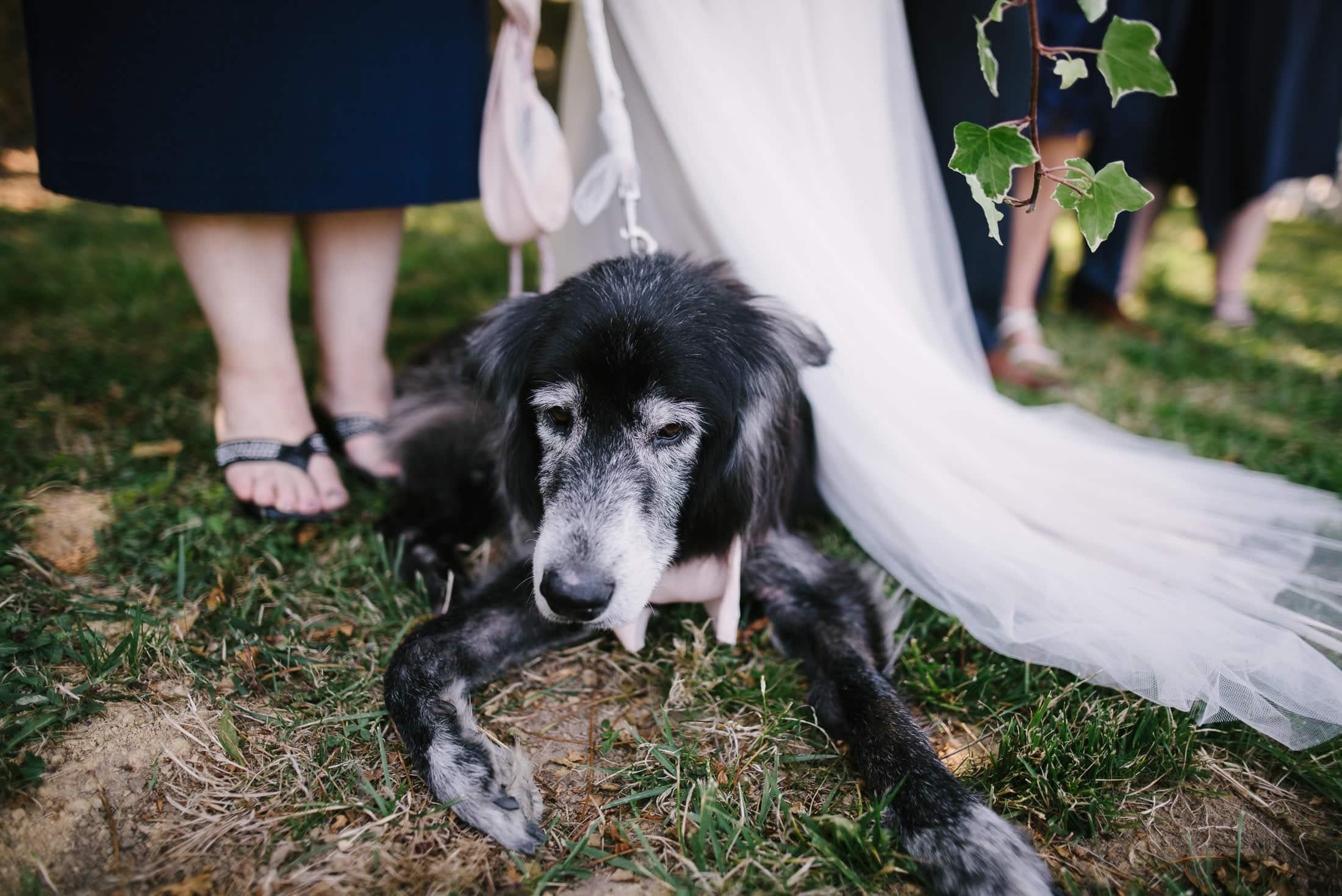 Dog Portrait Wedding
