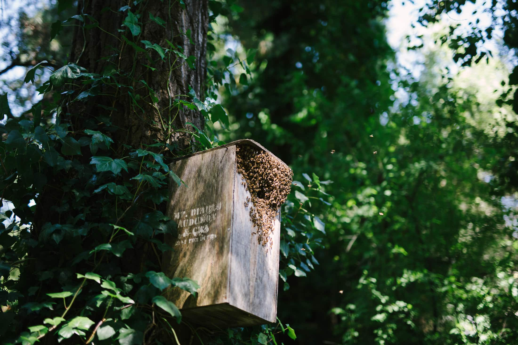 Bees in a box on a tree