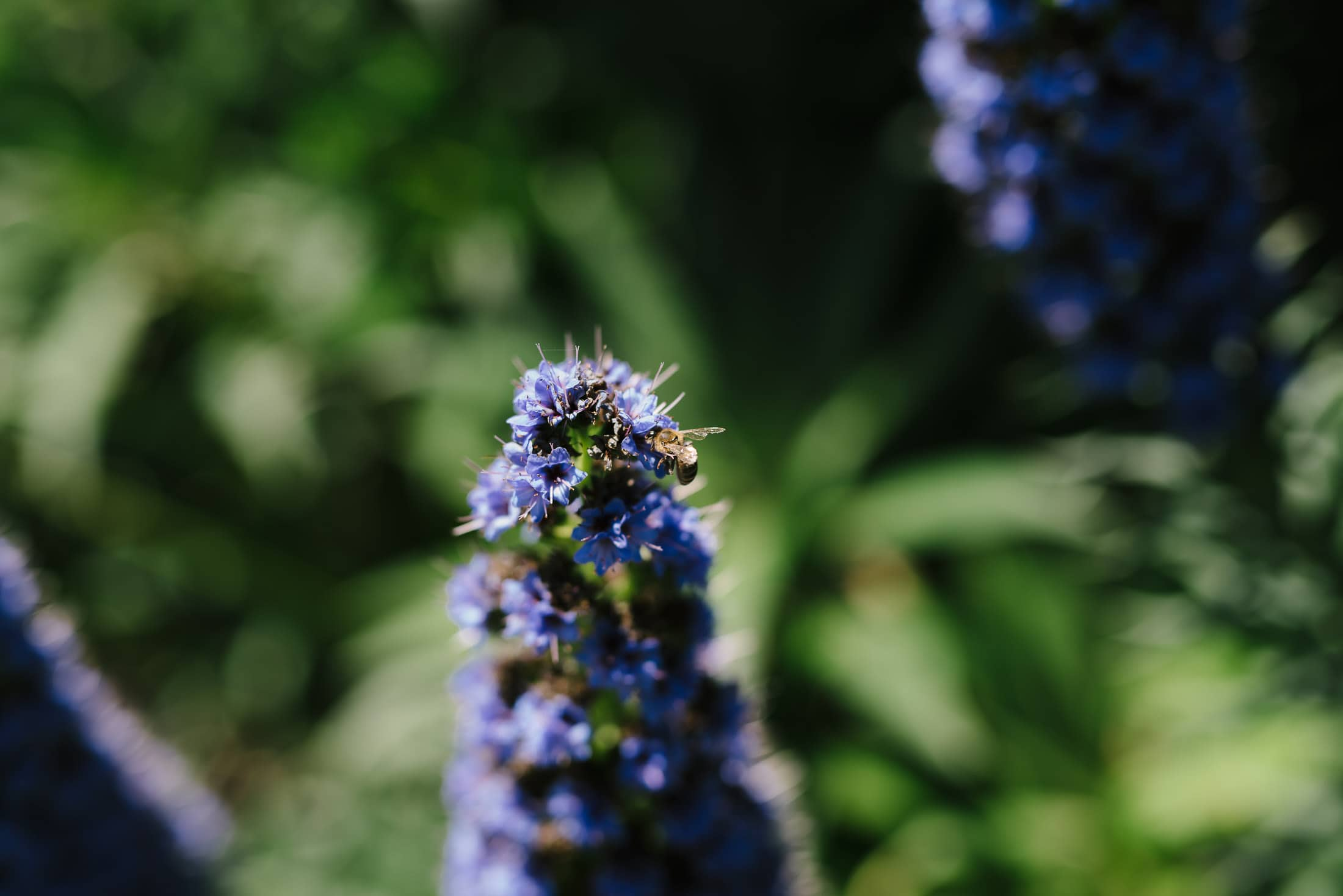 Detail of Flower with Bee