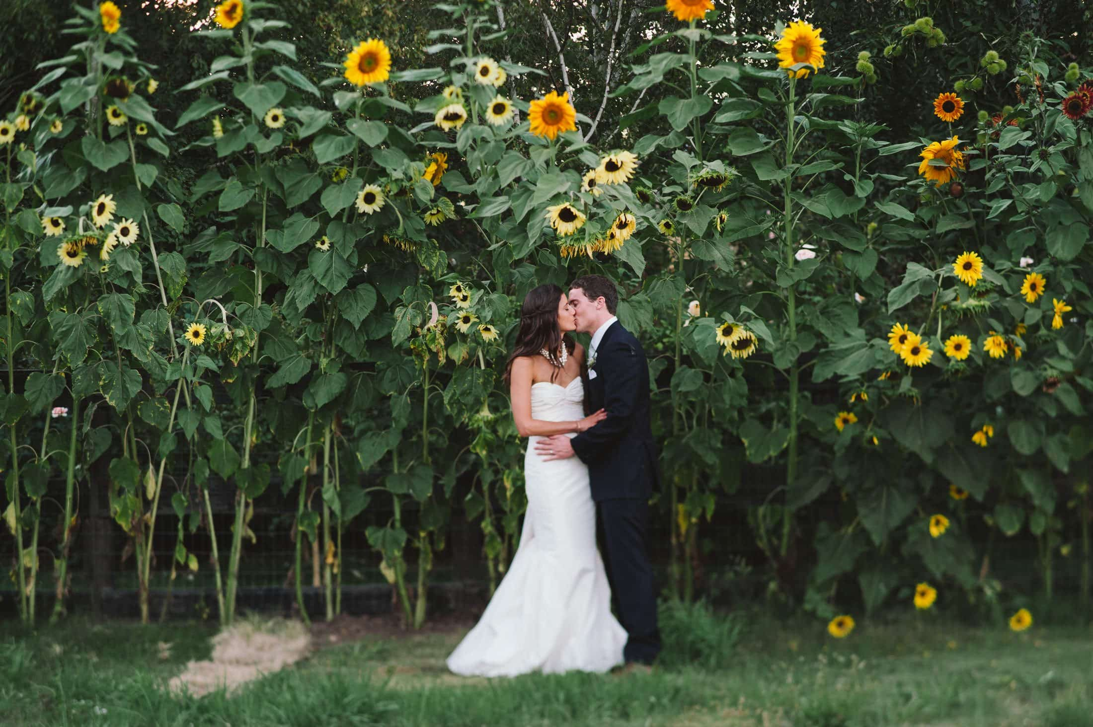 artistic kiss with sunflowers at sonoma garden pavilion wedding